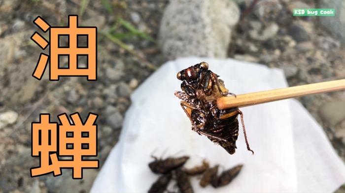 昆虫食の王様はセミで決定しました