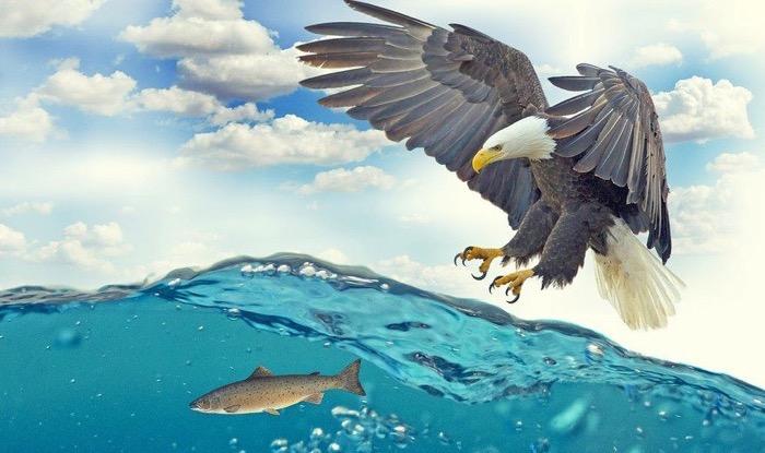 孤立した池や湖にいる魚はどこから来た?鳥が運んだ説が実証される